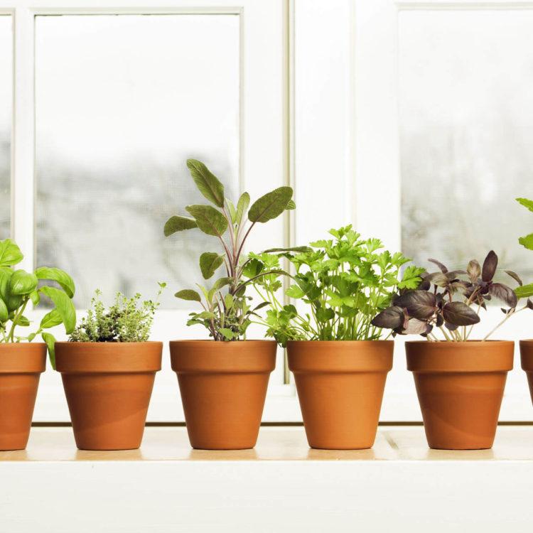 vasinhos de horta em casa